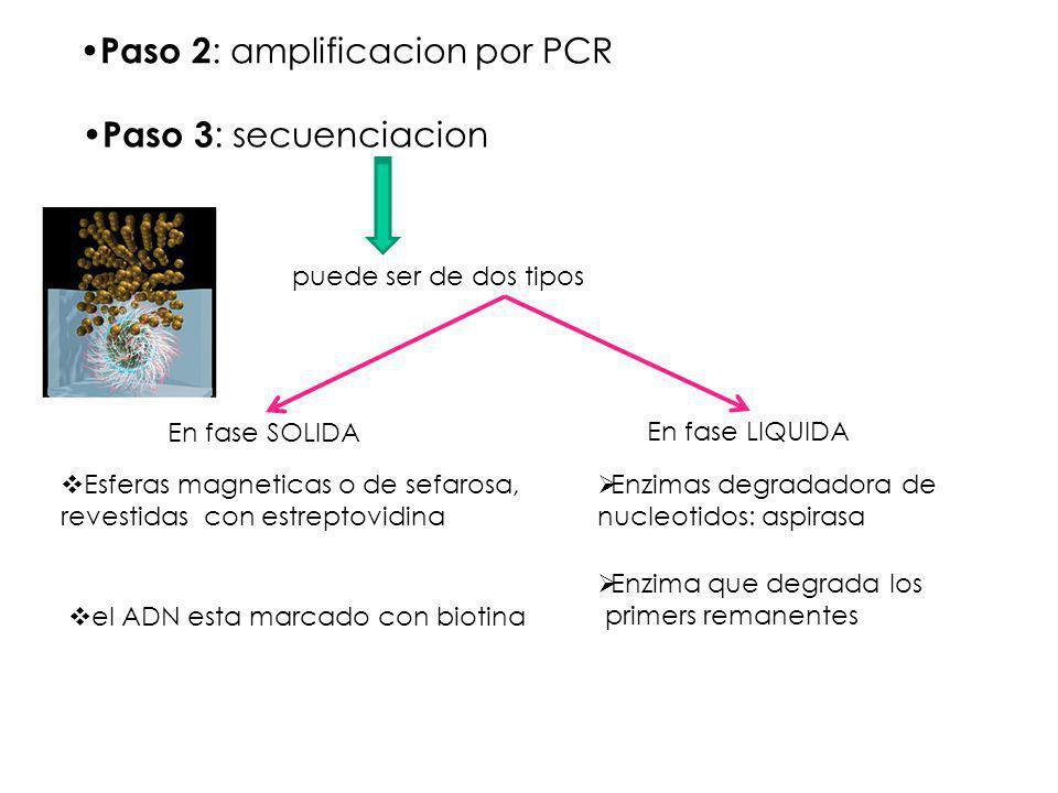 Paso 2: amplificacion por PCR