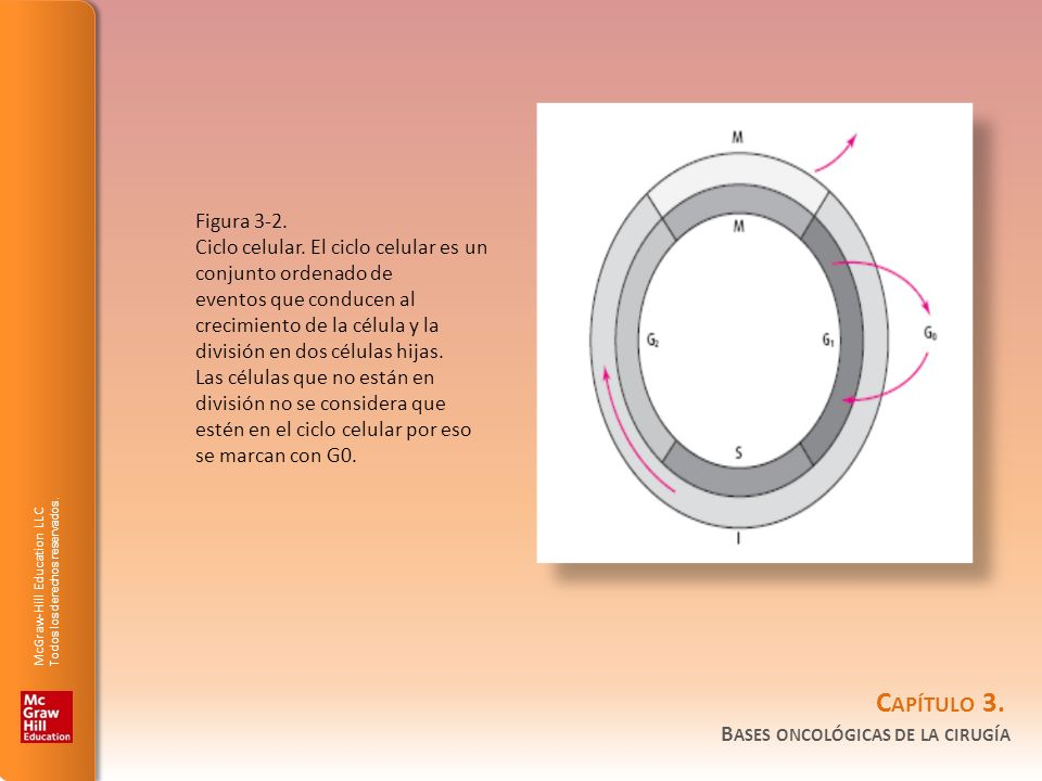 Figura 3-2. Ciclo celular. El ciclo celular es un conjunto ordenado de.