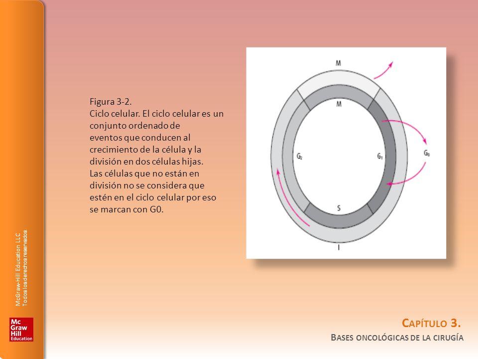 Figura 3-2.Ciclo celular. El ciclo celular es un conjunto ordenado de.