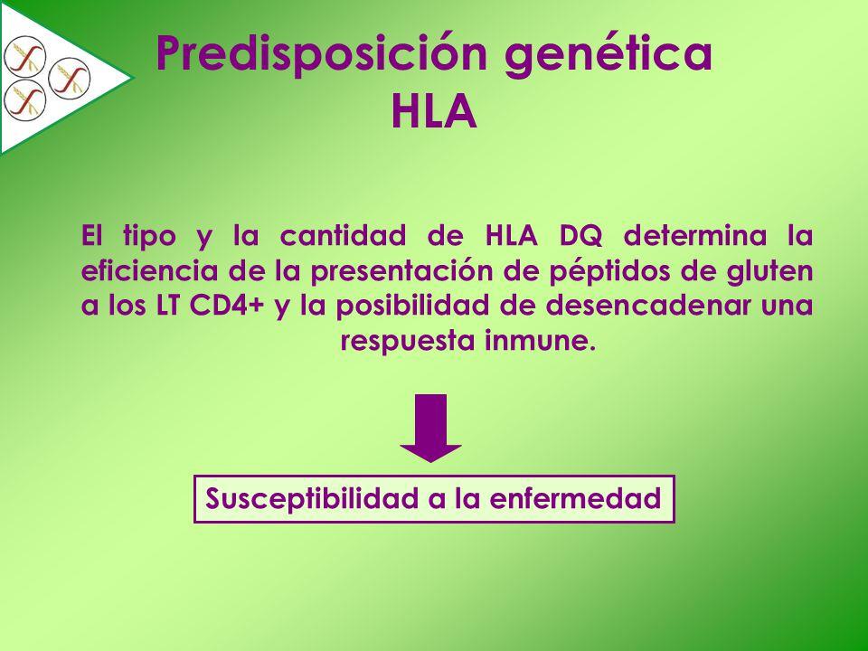 Predisposición genética HLA Susceptibilidad a la enfermedad