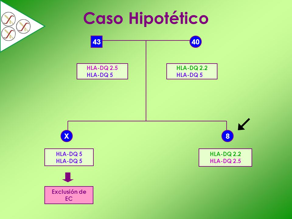 Caso Hipotético 43 40 X 8 HLA-DQ 2.5 HLA-DQ 5 HLA-DQ 2.2 HLA-DQ 5