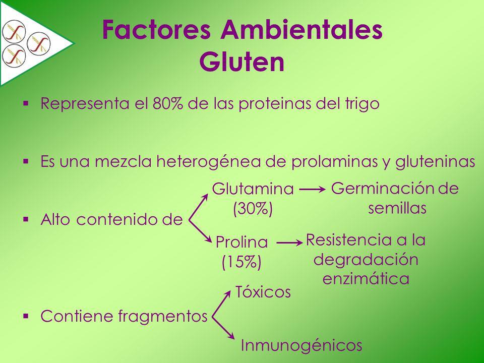 Factores Ambientales Gluten