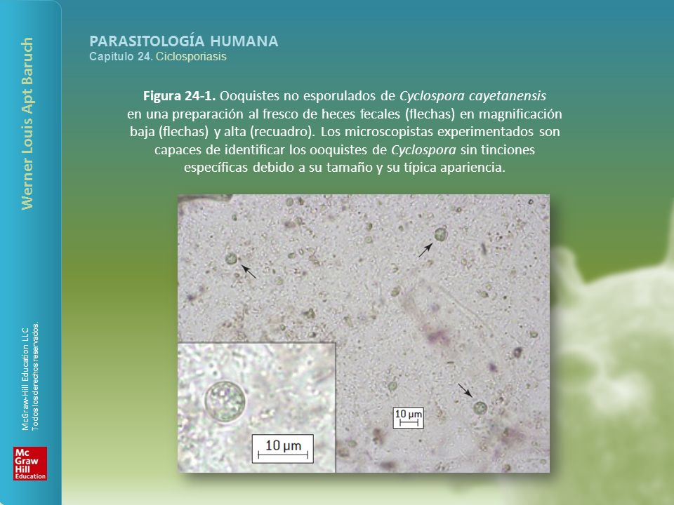 Figura 24-1. Ooquistes no esporulados de Cyclospora cayetanensis