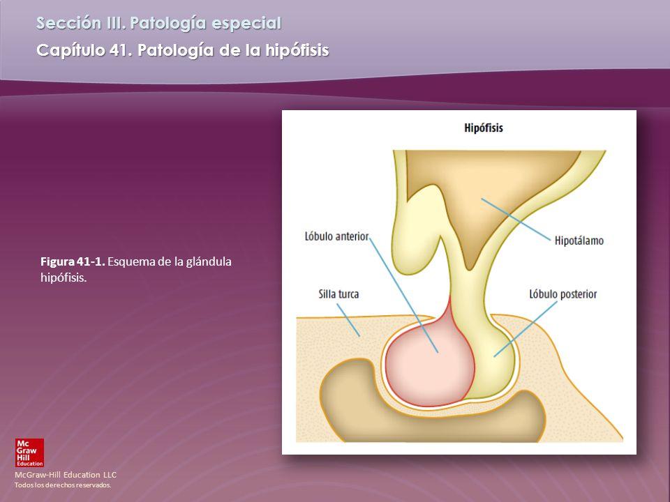 Figura 41-1. Esquema de la glándula hipófisis.