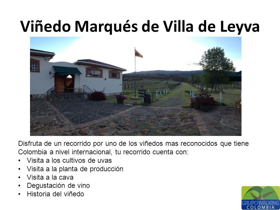 Viñedo Marqués de Villa de Leyva