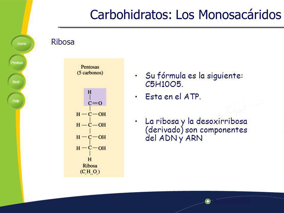 Carbohidratos: Los Monosacáridos