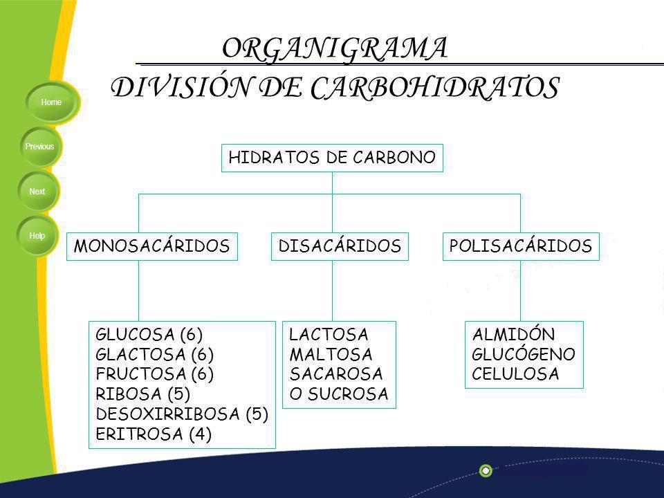 DIVISIÓN DE CARBOHIDRATOS