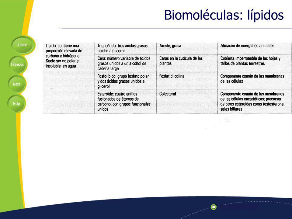 Biomoléculas: lípidos