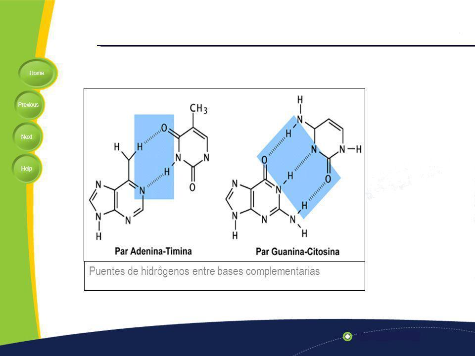 Puentes de hidrógenos entre bases complementarias