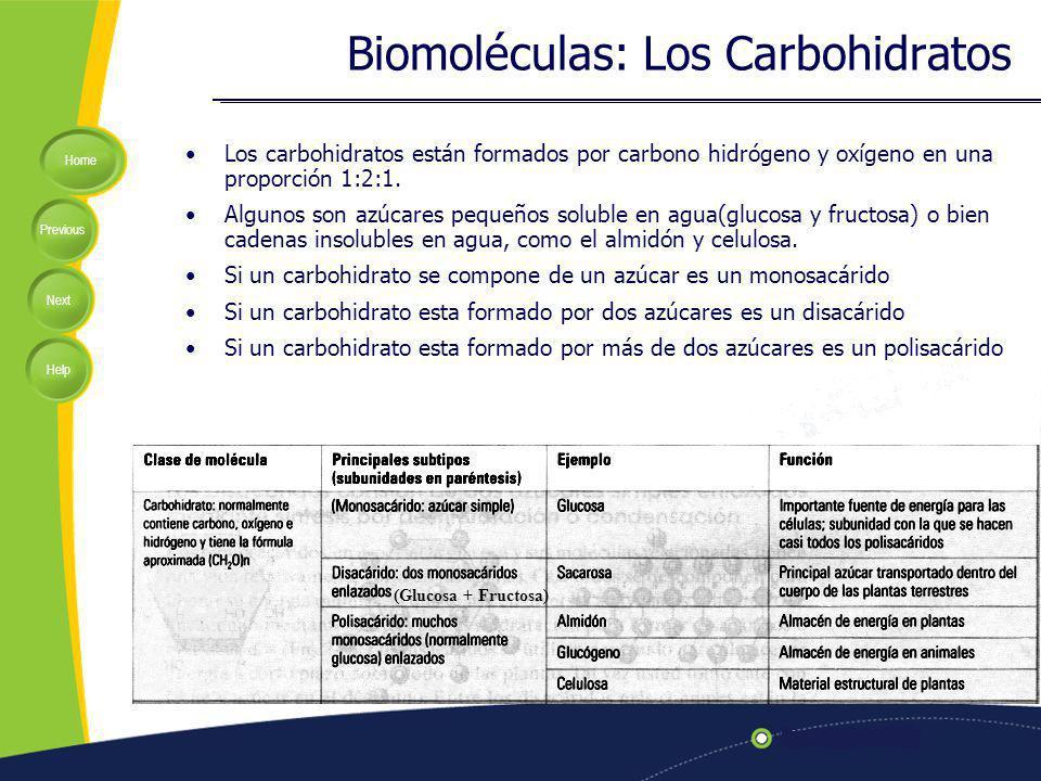 Biomoléculas: Los Carbohidratos