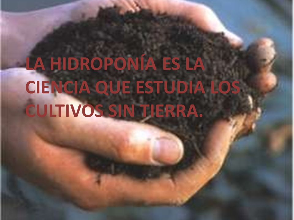 La Hidroponía es la ciencia que estudia los cultivos sin tierra.