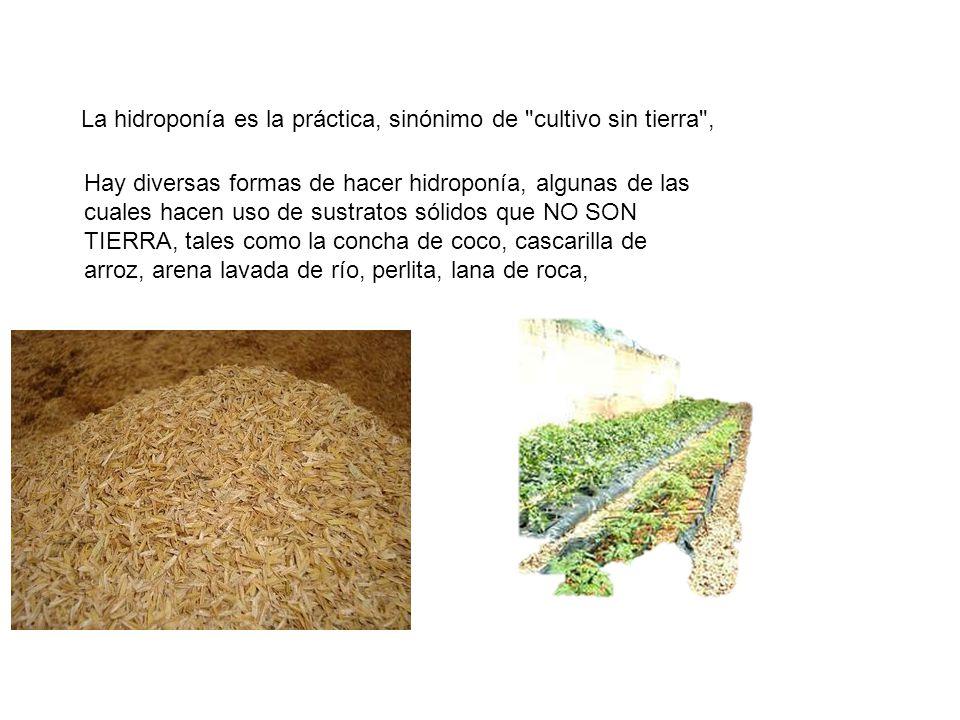 La hidroponía es la práctica, sinónimo de cultivo sin tierra ,