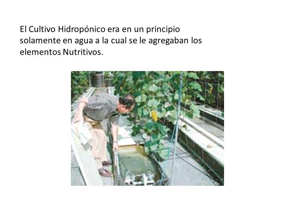 El Cultivo Hidropónico era en un principio solamente en agua a la cual se le agregaban los elementos Nutritivos.