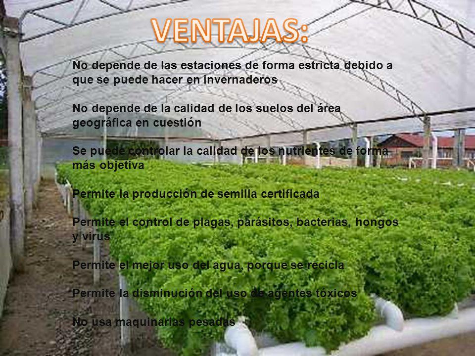 VENTAJAS: No depende de las estaciones de forma estricta debido a que se puede hacer en invernaderos.