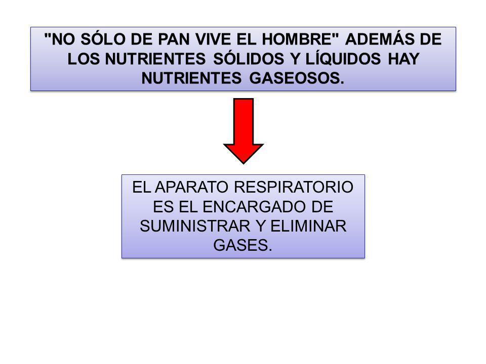 NO SÓLO DE PAN VIVE EL HOMBRE ADEMÁS DE LOS NUTRIENTES SÓLIDOS Y LÍQUIDOS HAY NUTRIENTES GASEOSOS.