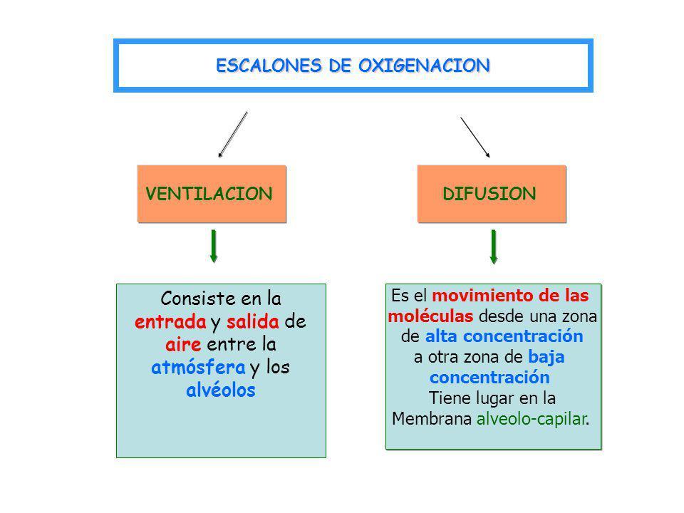 ESCALONES DE OXIGENACION