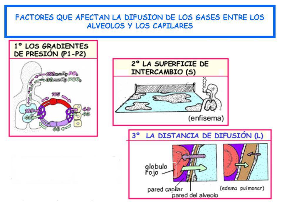 FACTORES QUE AFECTAN LA DIFUSION DE LOS GASES ENTRE LOS ALVEOLOS Y LOS CAPILARES
