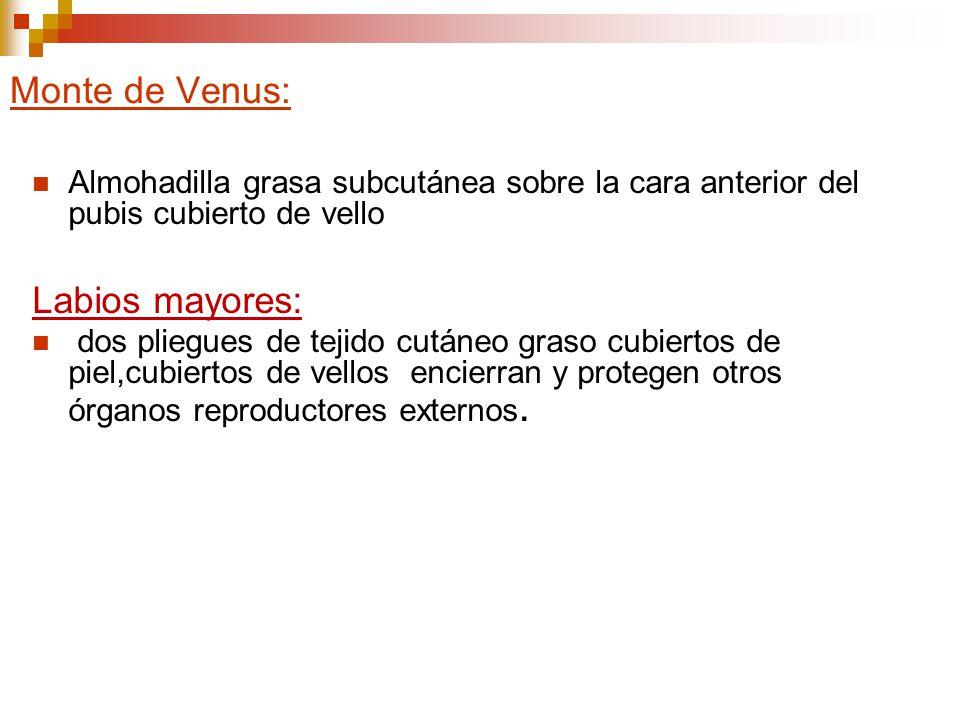 Monte de Venus: Labios mayores: