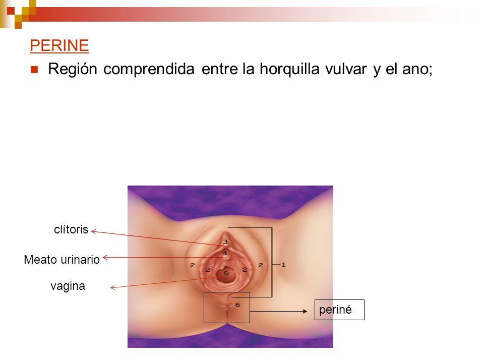 Región comprendida entre la horquilla vulvar y el ano;