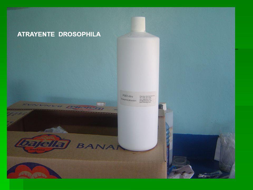 ATRAYENTE DROSOPHILA