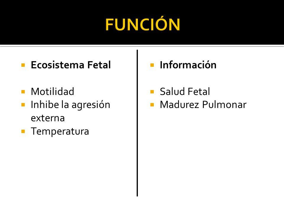 FUNCIÓN Ecosistema Fetal Motilidad Inhibe la agresión externa