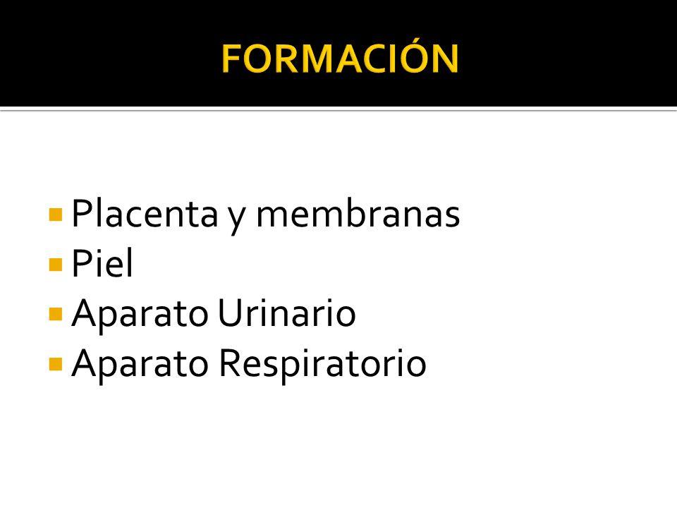 FORMACIÓN Placenta y membranas Piel Aparato Urinario