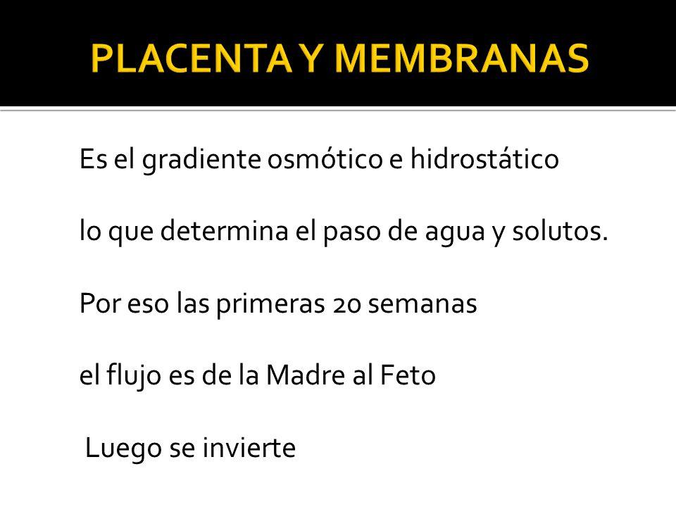 Placenta y Membranas Es el gradiente osmótico e hidrostático