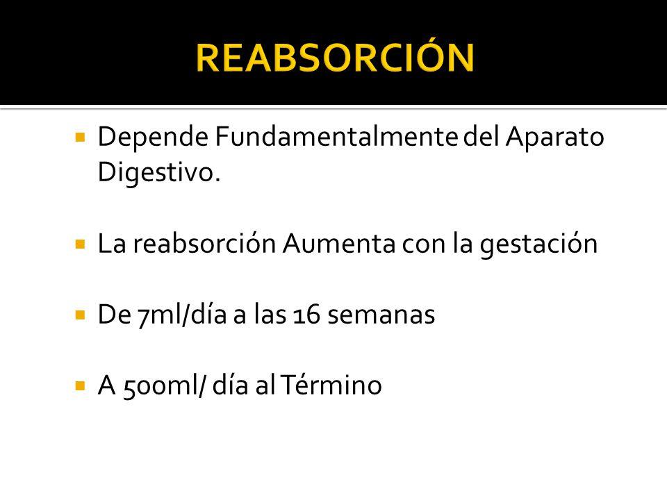 Reabsorción Depende Fundamentalmente del Aparato Digestivo.