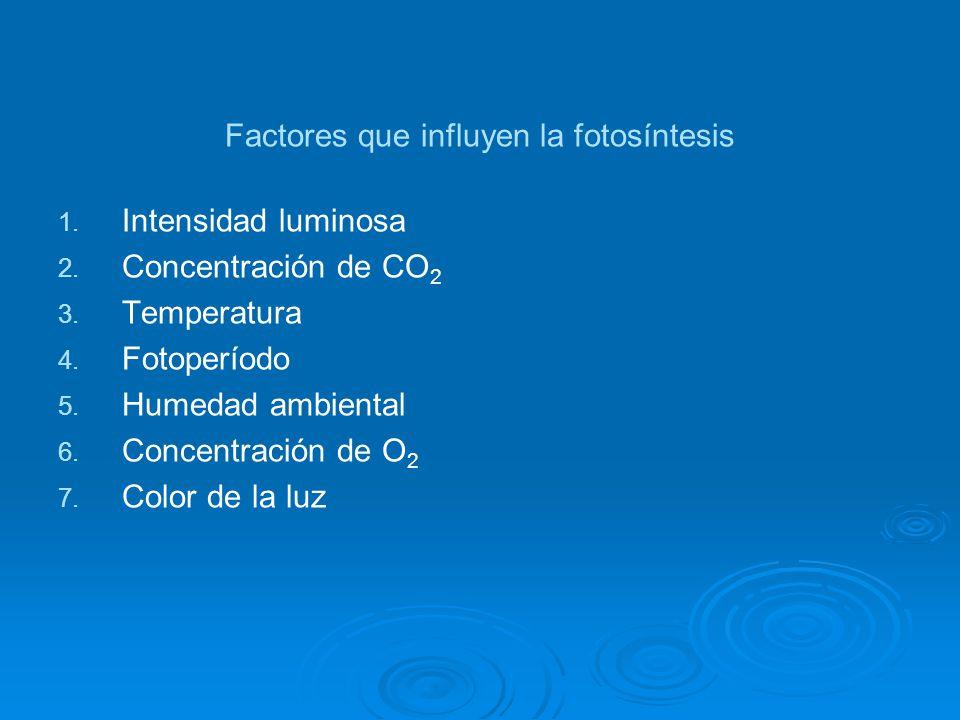 Factores que influyen la fotosíntesis