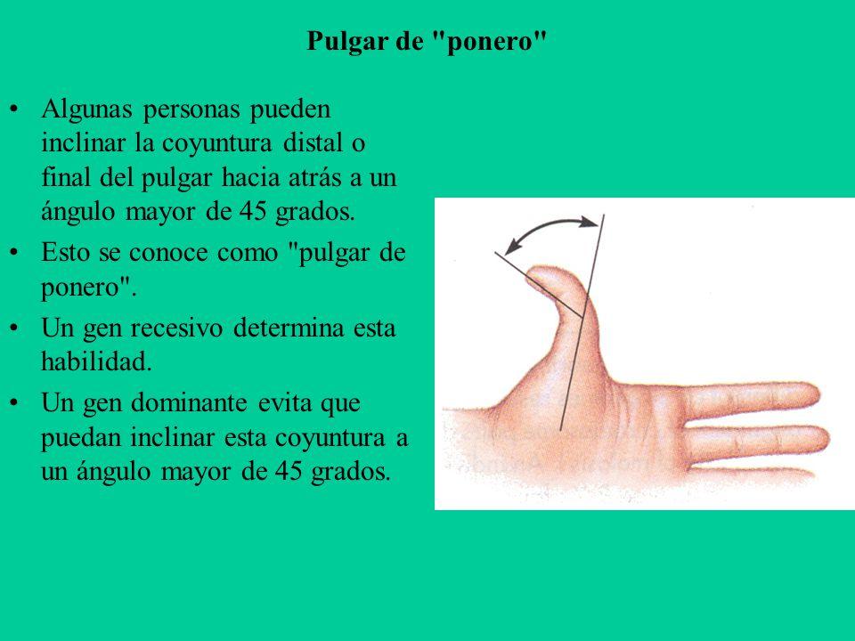 Pulgar de ponero Algunas personas pueden inclinar la coyuntura distal o final del pulgar hacia atrás a un ángulo mayor de 45 grados.