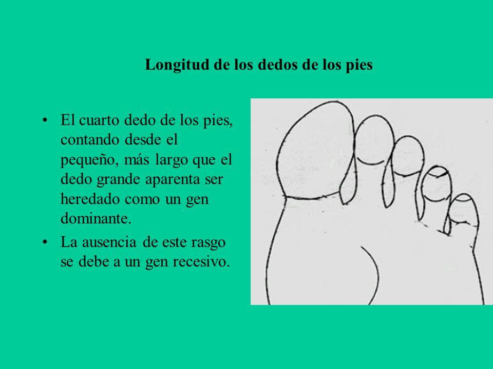 Longitud de los dedos de los pies