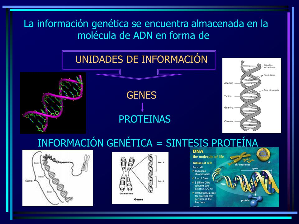 La información genética se encuentra almacenada en la
