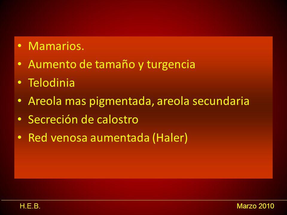 Mamarios. Aumento de tamaño y turgencia. Telodinia. Areola mas pigmentada, areola secundaria. Secreción de calostro.