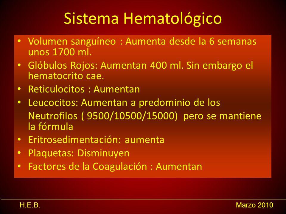 Sistema Hematológico Volumen sanguíneo : Aumenta desde la 6 semanas unos 1700 ml. Glóbulos Rojos: Aumentan 400 ml. Sin embargo el hematocrito cae.