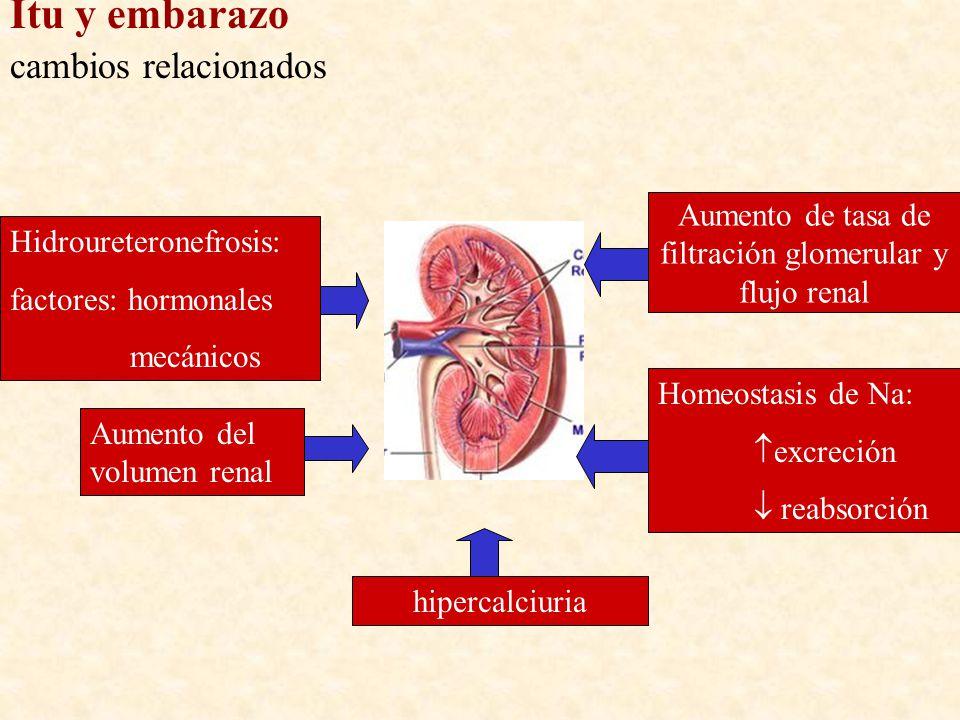Aumento de tasa de filtración glomerular y flujo renal