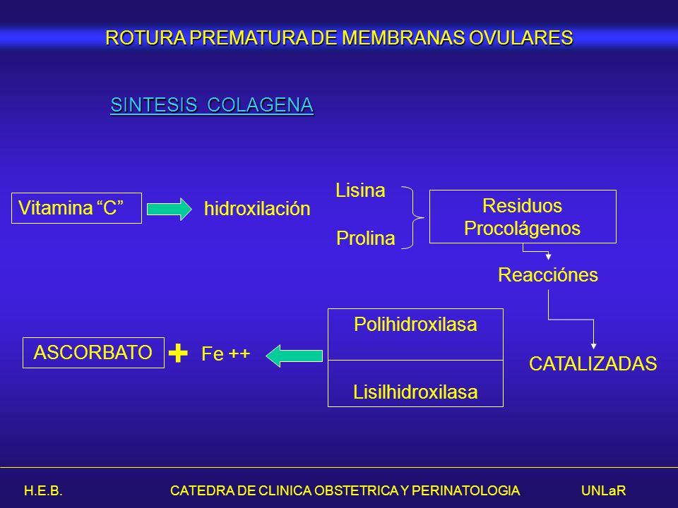 + ROTURA PREMATURA DE MEMBRANAS OVULARES SINTESIS COLAGENA Prolina