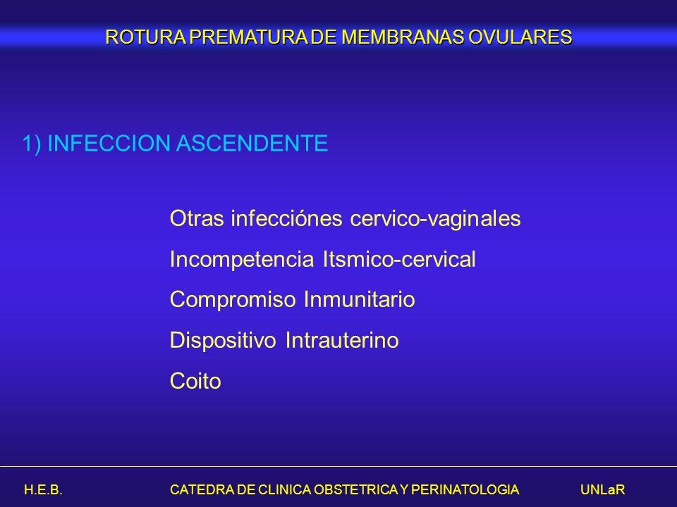 1) INFECCION ASCENDENTE