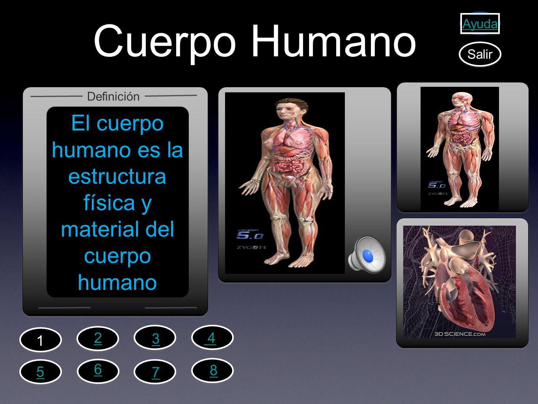El cuerpo humano es la estructura física y material del cuerpo humano