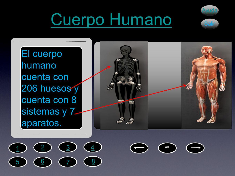 Cuerpo Humano Ayuda. Salir. El cuerpo humano cuenta con 206 huesos y cuenta con 8 sistemas y 7 aparatos.