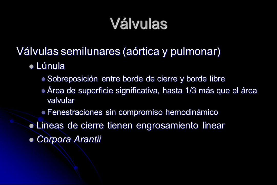 Válvulas Válvulas semilunares (aórtica y pulmonar) Lúnula
