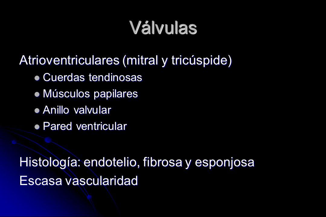 Válvulas Atrioventriculares (mitral y tricúspide)