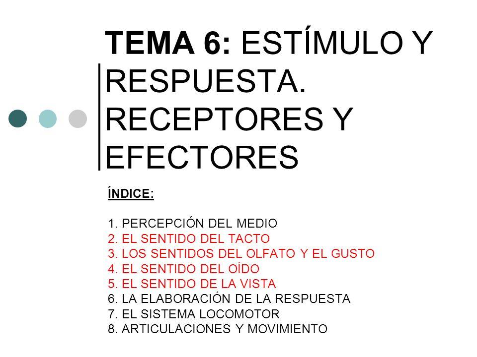 TEMA 6: ESTÍMULO Y RESPUESTA. RECEPTORES Y EFECTORES