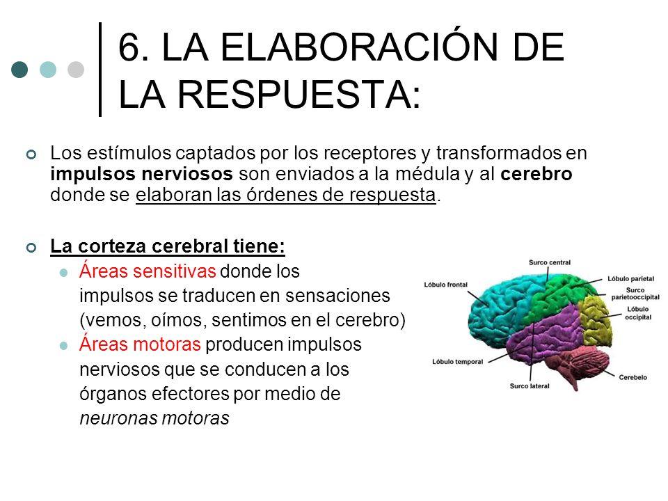 6. LA ELABORACIÓN DE LA RESPUESTA: