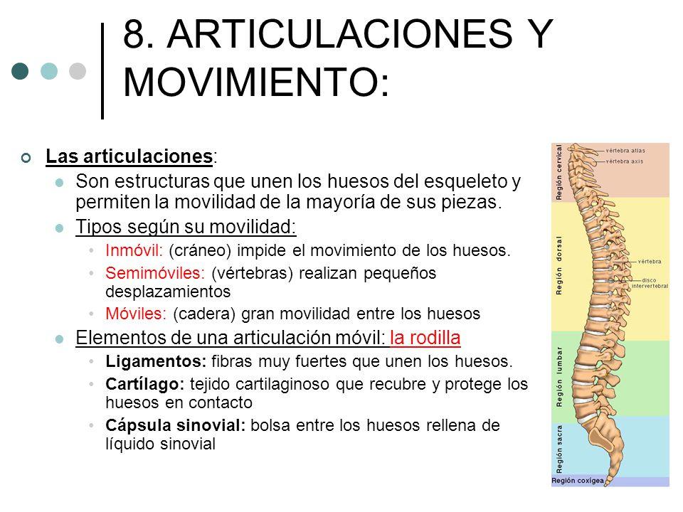 8. ARTICULACIONES Y MOVIMIENTO: