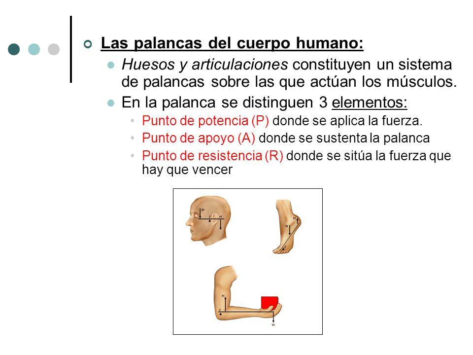Las palancas del cuerpo humano: