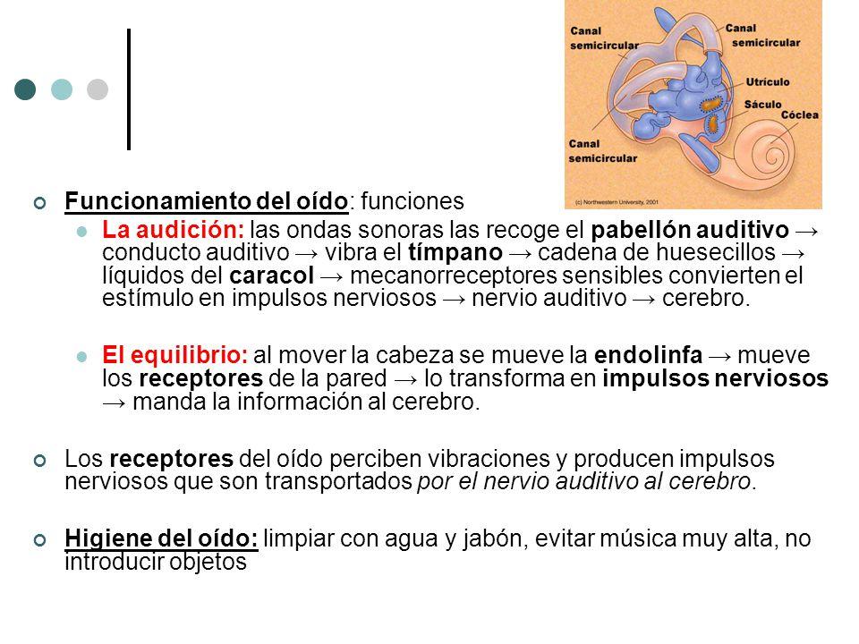 Funcionamiento del oído: funciones