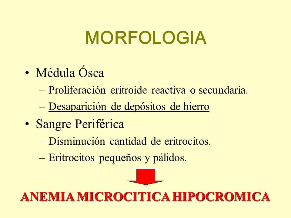 MORFOLOGIA Médula Ósea Sangre Periférica