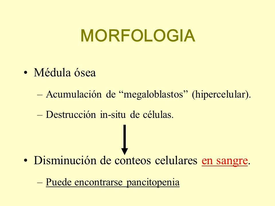 MORFOLOGIA Médula ósea Disminución de conteos celulares en sangre.