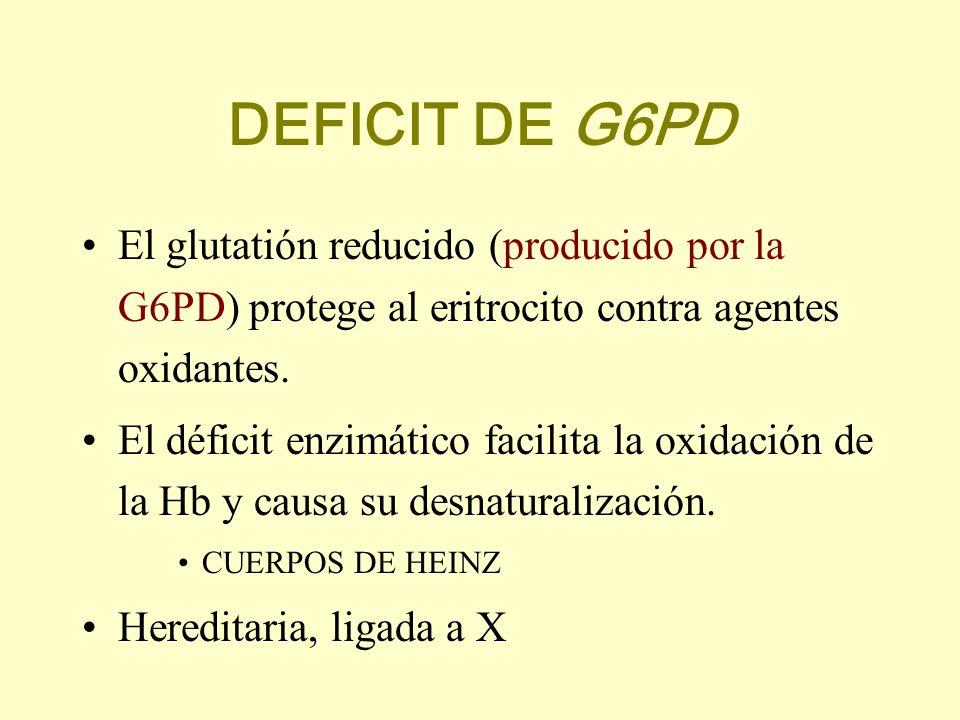 DEFICIT DE G6PD El glutatión reducido (producido por la G6PD) protege al eritrocito contra agentes oxidantes.