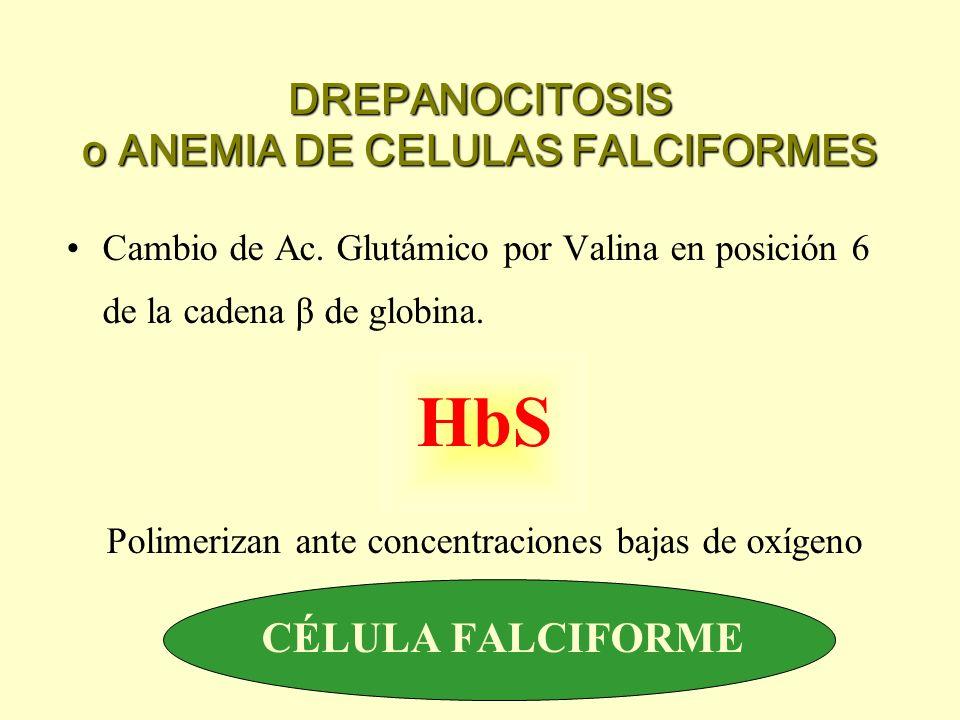 DREPANOCITOSIS o ANEMIA DE CELULAS FALCIFORMES